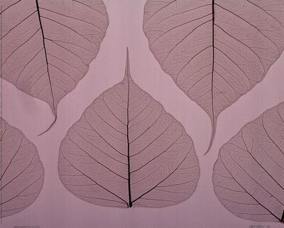 https://imgc.artprintimages.com/img/print/sheer-leaves-ii_u-l-f8im1q0.jpg?p=0