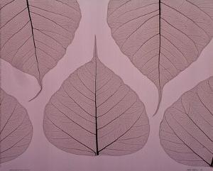 Sheer Leaves II