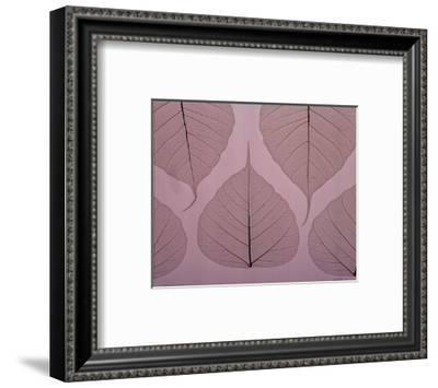 Sheer Leaves II--Framed Art Print