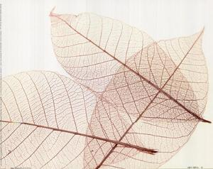 Sheer Leaves III