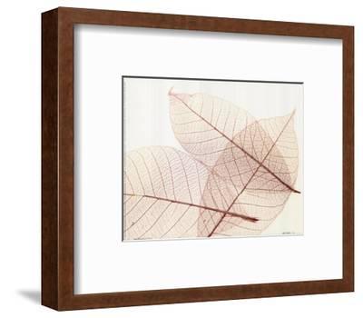 Sheer Leaves III--Framed Art Print