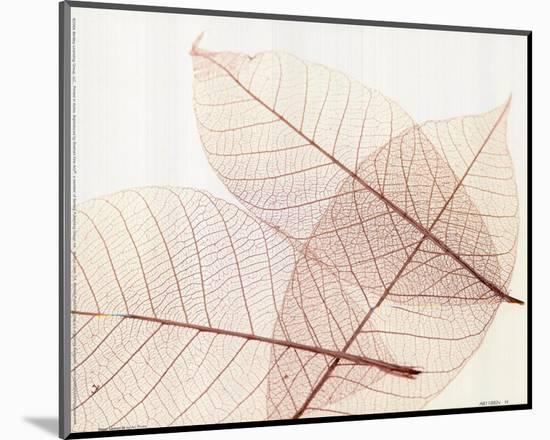 Sheer Leaves III--Mounted Art Print