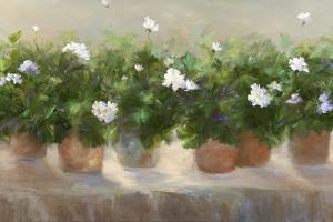 White Geraniums by Sheila Finch