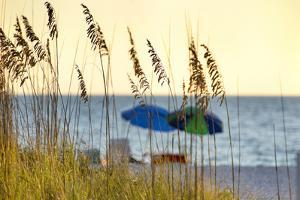 A Day at the Beach Is Seen Through the Sea Oats, West Coast, Florida by Sheila Haddad