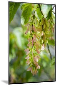 Cluster Flowers Vertical by Sheila Haddad