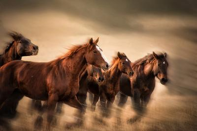 Running Horses, Blur and Flying Manes