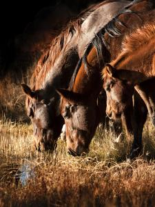 Three Horses Drinking in Dusky Light by Sheila Haddad