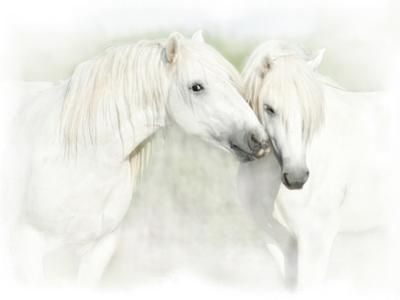 Two White Horses of Camargue, French, Nuzzling by Sheila Haddad