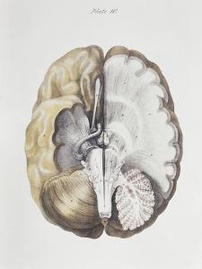 Brain Anatomy by Sheila Terry