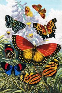 Butterflies, Artwork by Sheila Terry