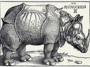 Durer's Rhinoceros, 1515 by Sheila Terry