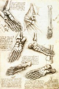 Foot Anatomy by Leonardo Da Vinci by Sheila Terry