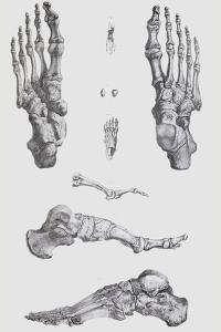 Foot Bones by Sheila Terry