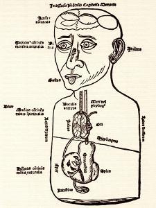 Internal Anatomy, 15th Century Diagram by Sheila Terry