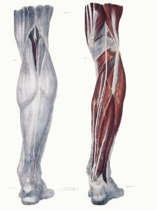 Leg Nerves by Sheila Terry