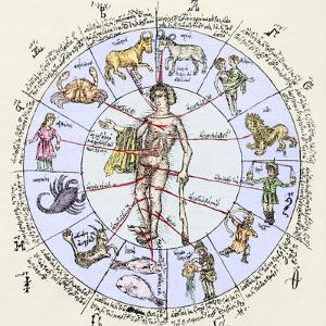 Medical Zodiac, 15th Century Diagram by Sheila Terry