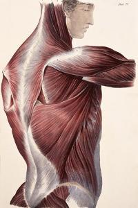 Muscles of the Side And Back by Sheila Terry