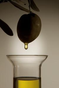 Olive And Olive Oil by Sheila Terry