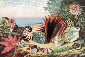 Sea Shells by Sheila Terry