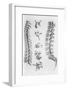 Spine Anatomy by Sheila Terry