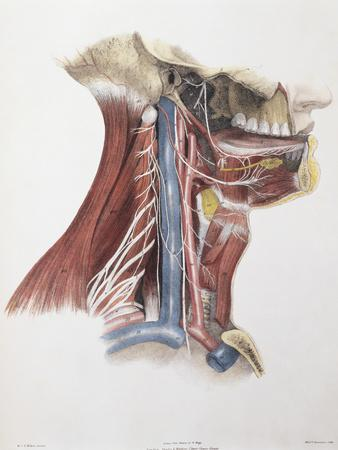 Twelfth Cranial Nerve
