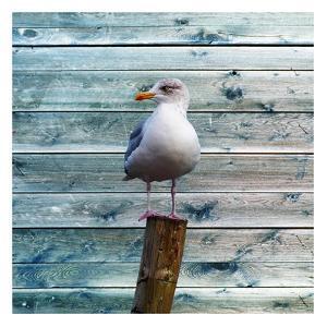 Bay Bird by Sheldon Lewis