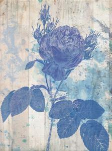 Blue Rose In My Garden by Sheldon Lewis