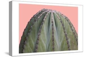 Cactus Ball by Sheldon Lewis