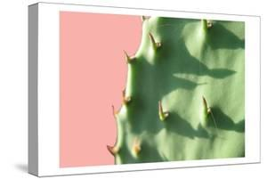 Cactus Flat by Sheldon Lewis