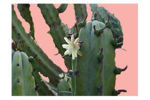 Cactus Flower by Sheldon Lewis