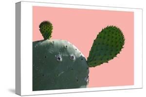 Cactus Slice 1 by Sheldon Lewis