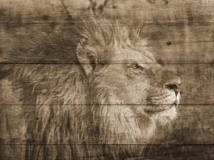 King by Sheldon Lewis