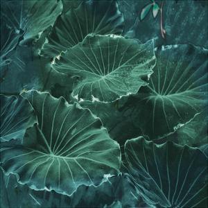 Mello Tropical by Sheldon Lewis