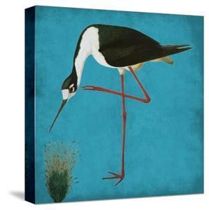 Natural Balance 1 by Sheldon Lewis