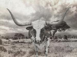 Steer by Sheldon Lewis