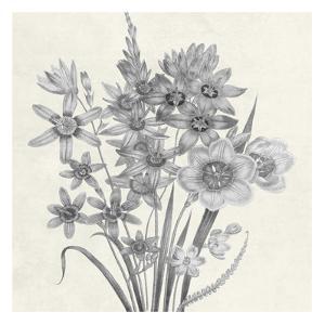 Terrarium Floral by Sheldon Lewis
