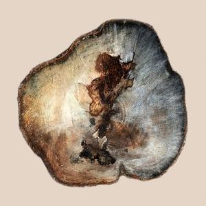 Tree Ring Stump 1 by Sheldon Lewis