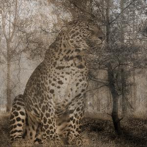 Wild Jungle 1 by Sheldon Lewis