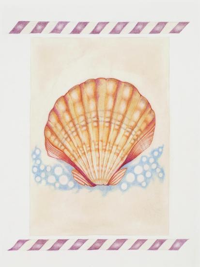 Shell Cardita-Deborah Kopka-Giclee Print