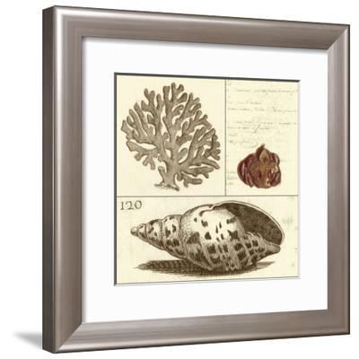 Shell Classification III-Vision Studio-Framed Art Print