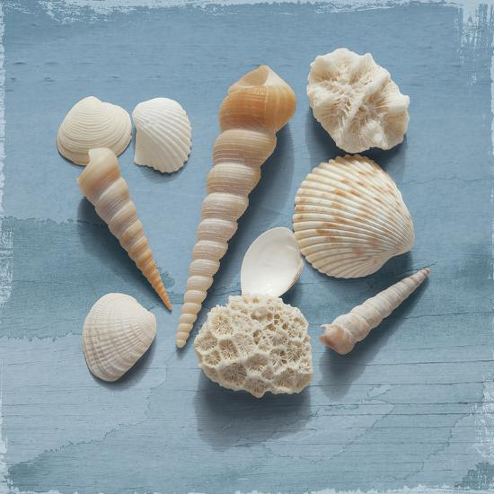Shell Collection II-Bill Philip-Art Print