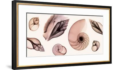 Shell Collection (Sepia)-Steven N. Meyers-Framed Giclee Print