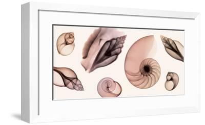 Shell Collection (Sepia)-Steven N. Meyers-Framed Giclee Print