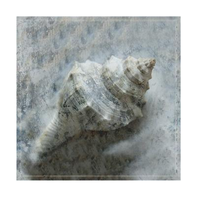 https://imgc.artprintimages.com/img/print/shell-diary-2_u-l-pxkv9j0.jpg?p=0