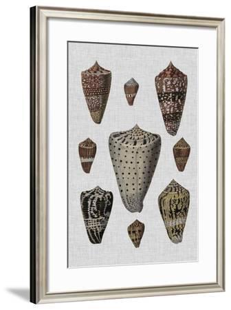 Shell Display I-Denis Diderot-Framed Art Print