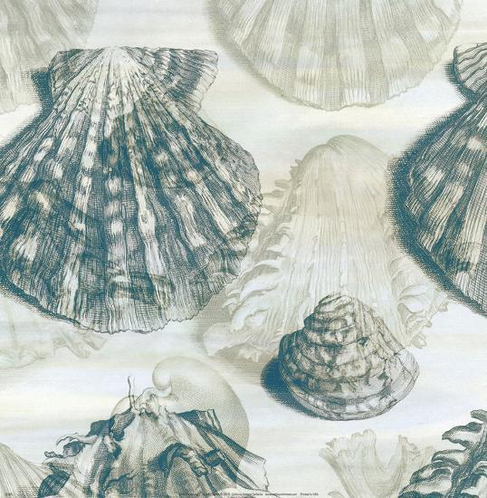 Shell Engraving 2-John Butler-Art Print
