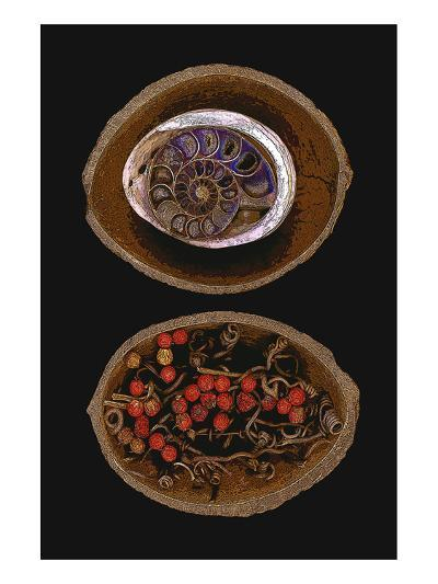 Shell Fossil Ammonite--Art Print