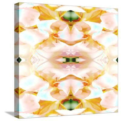 Shell Game-Rose Anne Colavito-Stretched Canvas Print