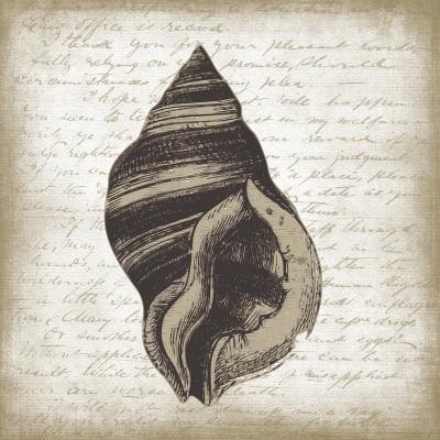 Shell II-Erin Clark-Giclee Print