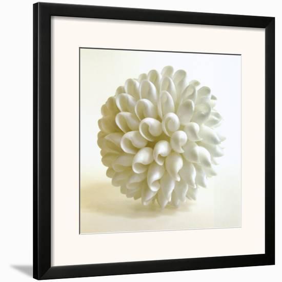 Shell III-Darlene Shiels-Framed Art Print